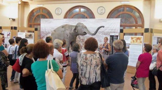 Il museo di storia naturale di palazzo Botta
