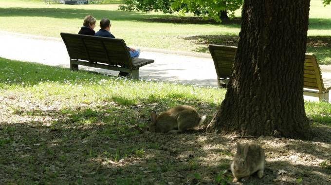 Conigli al parco urbano (Frasca)