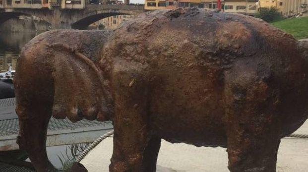 La statua dell'elefantino ripescata in Arno l'altro ieri