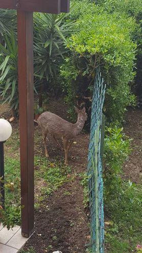 L'animale è arrivato all'improvviso in via Civitanova, nel quartiere di Posatora