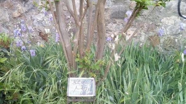 "La targa commemorativa di Gino Bartali deturpata dai vandali (foto da ""Moked"")"