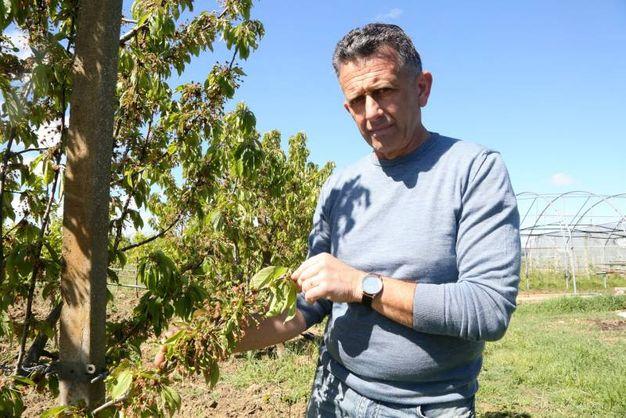 Claudio Bartolini, consigliere Apofruit (foto Ravaglia)