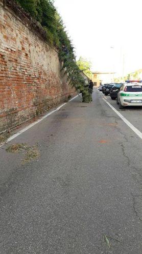 Il ramo appoggiato alle mura a Mulazzano in via Mare