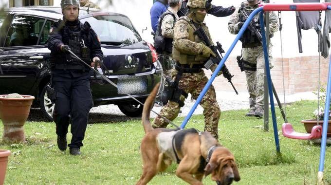 Anche il fiuto dei cani molecolari a caccia di Igor (Businesspress)