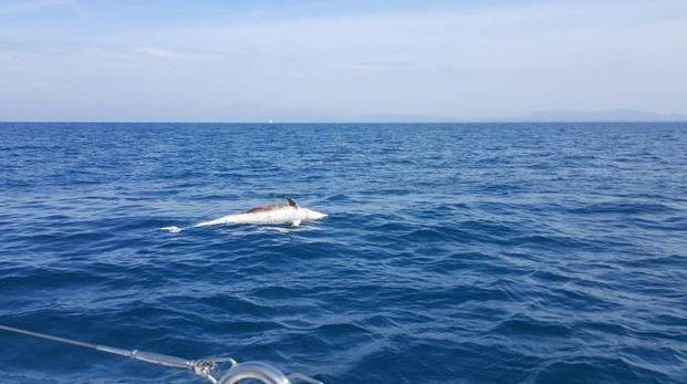Delfino morto vicino al bagno Europa - Cronaca - lanazione.it