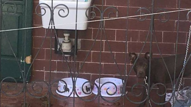 Il cane sequestrato