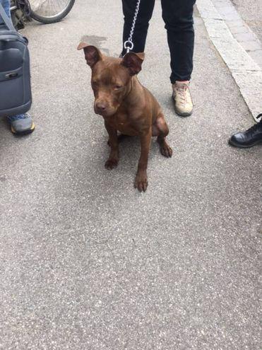 Il cane sequestrato dall'Enpa