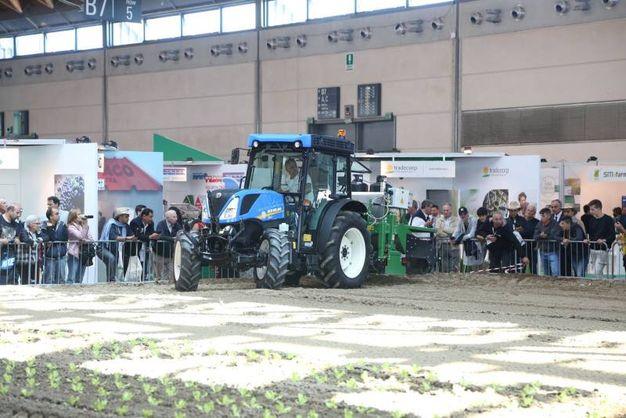 All'interno dei padiglioni della Fiera di Rimini è stato trasferito un campo coltivato (foto Ravaglia)
