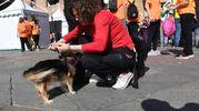 Da quest'anno anche i cani potevano partecipare alla StraBologna (fotoSchicchi)