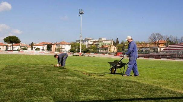 Lavori al manto erboso del Benelli, che domenica ospiterà la finale della Vis (fotoPrint)