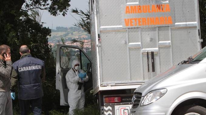 L'mabulanza veterinaria di Olindo Pinciaroli, il veterinario maceratese ucciso a coltellat