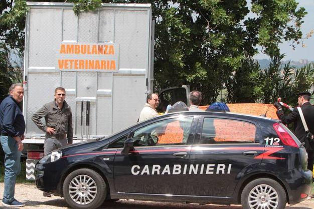 L'ambulanza veterinaria a bordo della quale viaggiavano Pinciaroli e il suo collaboratore (foto Antic)