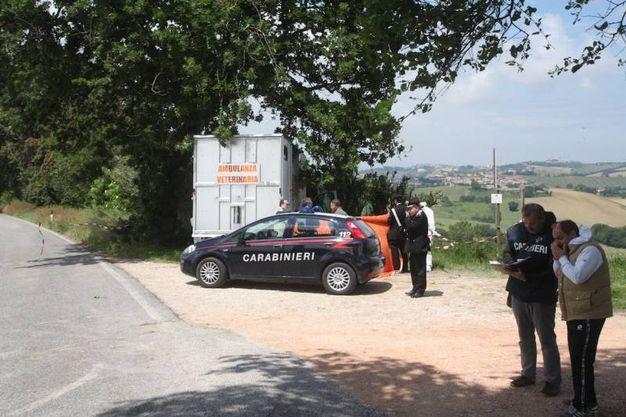 I carabinieri nel luogo dell'omicidio (foto Antic)