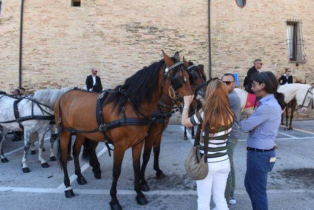 I cavalli sono gli animali che il veterinario ucciso a Osimo ha tanto amato e che lo hanno accompagnato anche nell'ultimo viaggio (foto De Marco)
