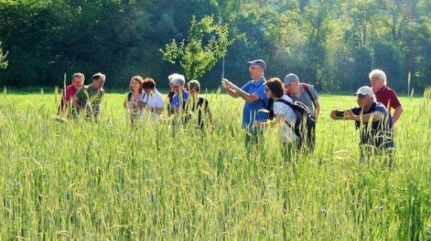 La delegazione nel verde dei fiordalisi di Friburgo