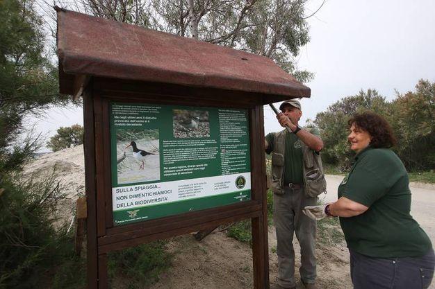 La riserva statale Sacca di Bellocchio, nel Parco del Delta (foto Zani)