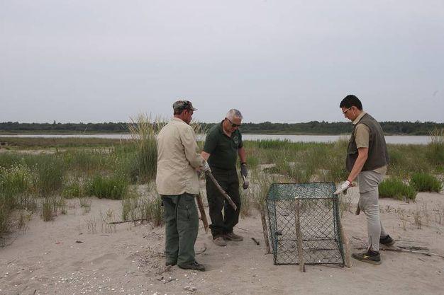 Stanno costruendo delle gabbie ad hoc per proteggerli dai cani e dai gabbiani (foto Zani)