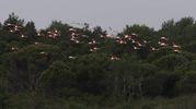 Anche i fenicotteri sono presenti nell'area (foto Zani)