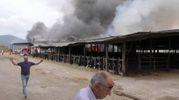 L'incendio nella tenuta di Marinella (Foto Pasquali)