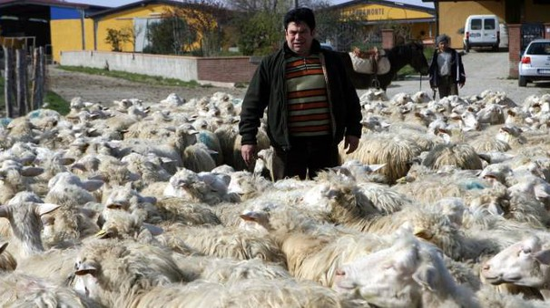 Gianni Loi, titolare dell'impresa agricola familiare 'Sopramonte'