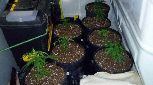 Le piante sequestrate
