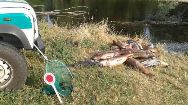 Bologna mor a di pesci nel fiume reno cronaca for Pesci di fiume