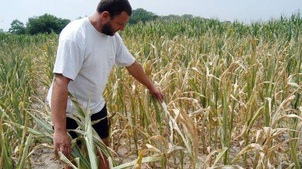 Allarme per la siccità