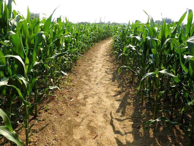 Il  tema portante del labirinto è 'Sospesi tra terra e cielo' (Foto Scardovi)