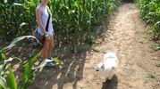 Una giovane visitatrice assieme al suo amico a 4 zampe (Foto Scardovi)