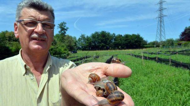 Giacinto Malnati con alcune delle sue lumache