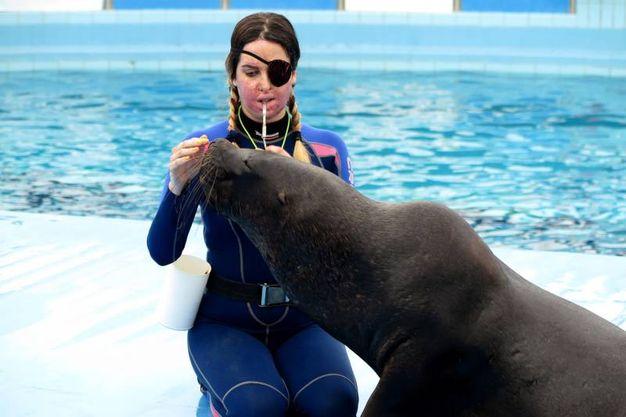 Gessica Notaro di nuovo in compagnia degli amati leoni marini (foto Petrangeli)