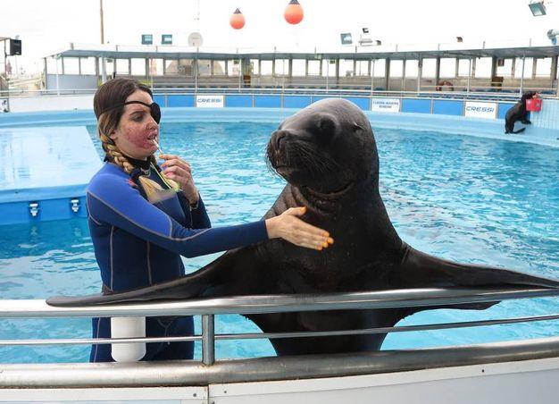Ha ripreso a lavorare con i leoni marini (foto Petrangeli)