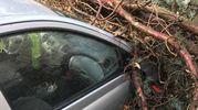 Un auto è rimasta schiacciata da un albero Ape