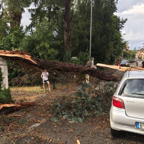 Il tronco è caduto sulla Yaris che era  parcheggiata