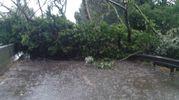 Un grande albero è stato sradicato e si è abbattuto sulla strada