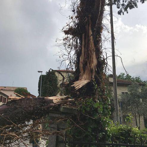 Un altro albero a terra