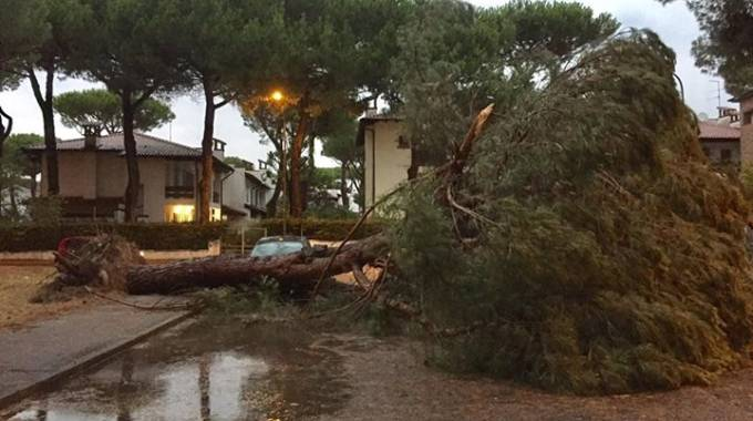 Centinaia gli alberi caduti per il maltempo tra giugno e luglio