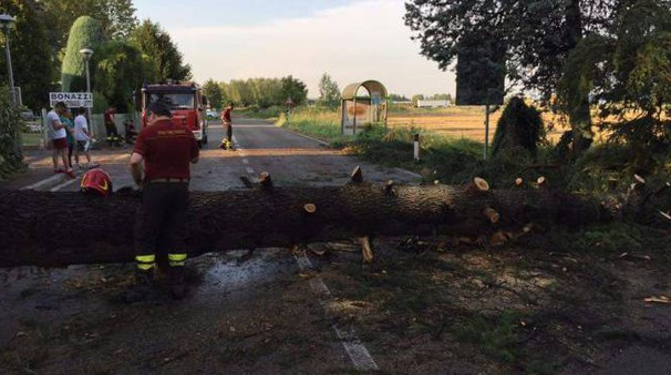 Via Rigosa a Zola bloccata da un albero caduto