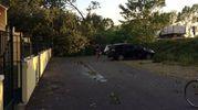 Rami e alberi caduti per il maltempo (foto Bellini)