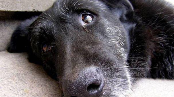 Cane anziano in una foto Lndc