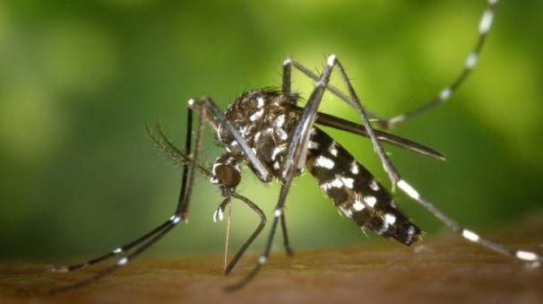 Il West Nile Virus è trasmesso dalle zanzare