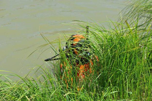Un sommozzatore nel canale (foto Artioli)