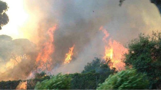 Roma, incendi a Castel Fusano (Ansa)