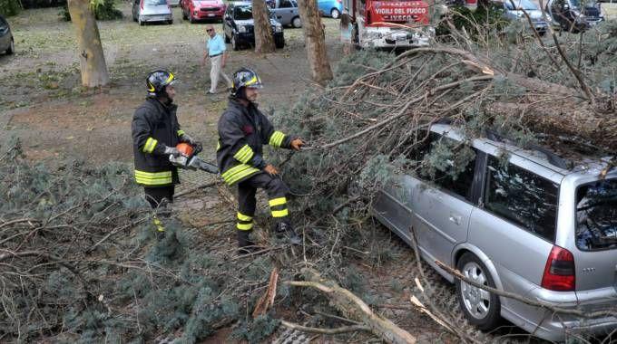 Gli alberi caduti sulle auto