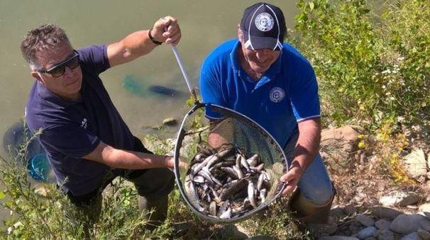 I pesci estratti vivi dal fiume