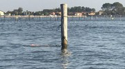La tragedia è avvenuta nel canale che collega Porto Levante all'isola dei vip. La vittima era con altre tre persone a bordo di un 'tender' (Foto Moretto)