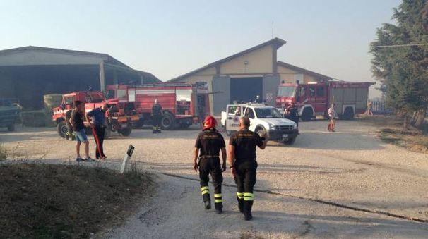 L'azienda del sindaco di Sant'Angelo in Vado, minacciata dal fuoco