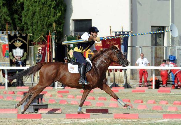 Cavaliere Solestà (foto Labolognese)