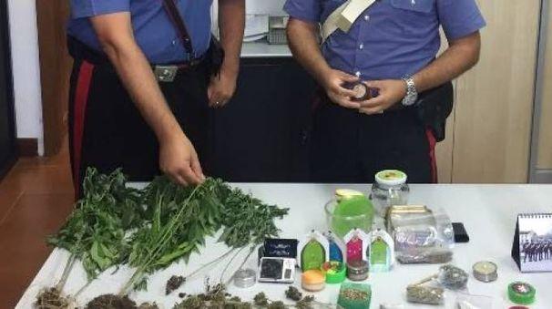 La droga sequestrata dai carabinieri di Pavia