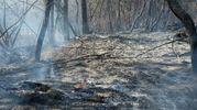 La vegetazione distrutta (foto Walter Bellisi)